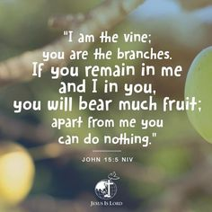 """VERSE OF THE DAY  """"I am the vine; you are the branches. If you remain in me and I in you, you will bear much fruit; apart from me you can do nothing."""" John 15:5 NIV #votd #verseoftheday #JIL #Jesus #JesusIsLord #JILchurch #JILworldwide"""