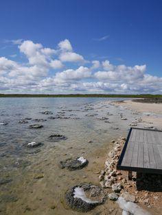 Stromatolites in the sun - Lake Thetis, Cervantes WA Australia Western Australia, Australia Travel, Perth, West Coast, Wildlife, Coral, Sun, Awesome, Places