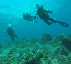 Cancun Diving Underwater Museum & Manchones