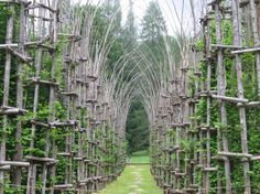 Italy's Natural Cathedral Is Made of Growing Trees