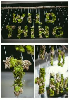 Where the Wild Things Are, decorative banner with Moss.