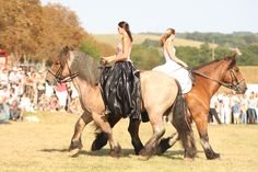 Auxois horses, you'd never fall off one of these!! Let's preserve this endangered breed.