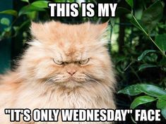This is my, its only Wednesday face?! - via @instagram
