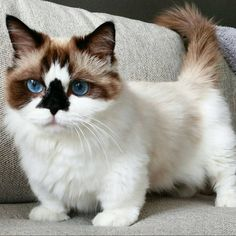 Look at this kitty's colors! Beautiful!                                                                                                                                                                                 More