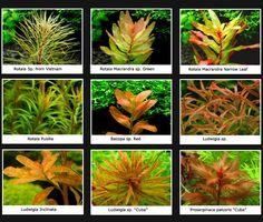 Yellow/orange plants