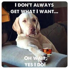 This is my dogs for sure!