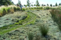 Meadow grass display by John Greenlee at Cornerstone Gardens in Sonoma.