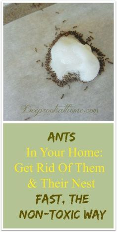 Get Rid Of Ants, Fast, The Non-Toxic Way. Simple recipe to make a non-toxic (for pets and kids) but effective homemade ant trap using boric acid powder and sugar. #recipe #diy #natural