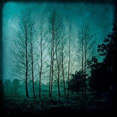 Surreal forest photography 8x8 landscape photo night by magnesina, $30.00