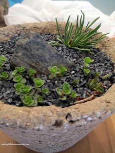 diy project hypertufa pots, container gardening, gardening, completed hypertufa pot