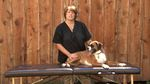 Tutorial video: How to give your dog a massage. Poor Sasha has been sore lately.