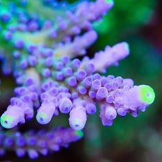 Corals, up close and personal.