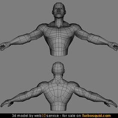 male torso bodybuilder anatomy - Cerca con Google