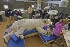 Career 4---Helping to make animals better is really rewarding