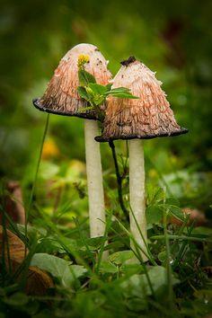 Mushrooms By Phil Lowe
