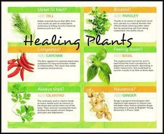 Foods that heal naturally.