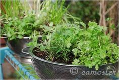 Upcycle old colanders or wellies into your very own container garden this Spring ♥ ♥ ♥