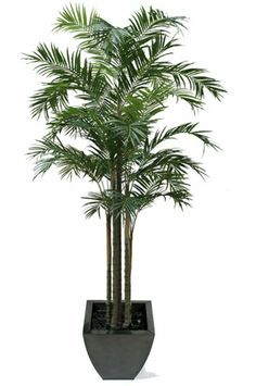 """Artificial 10ft 6"""" Areca Palm Tree (P080W) from Artplants.co.uk #palm #palmtree #artificialtree #artificialplant #houseplant"""