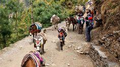 #Everest Base Camp #Trekking- #Nepal