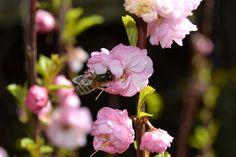 Nikon <3 Nikon, Rose, Nature, Flowers, Plants, Pink, Roses, Flora, Nature Illustration