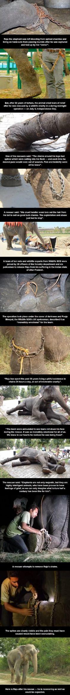 Elephant freed