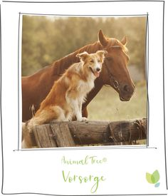 Country Dog Names, Farm Name, Name Generator, Cowboy Art, Horse Farms, Cute Dogs, Corgi, Horses, Pets