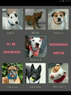 TOMARROW'S KILL LIST IT OUT EVERYBODY PLEASE SHARE & SAVE SOME LIVES