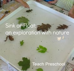 Sink or Float activity using nature. Students will be experimenting with leaves, sticks, acorns, rocks, etc in the water table. Students will make predictions on what objects they think will sink or float and then reflect on their findings. Kindergarten Science, Preschool Learning, Preschool Plans, Preschool Playground, Nature Activities, Science Activities, Science Education, Outdoor Education, Outdoor Learning