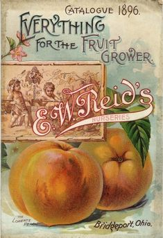 "Vintage Seed Catalog ""The Lorentz Peach""! Reid's Nurseries of Bridgeport Ohio Posters Vintage, Images Vintage, Vintage Diy, Vintage Labels, Vintage Ephemera, Vintage Cards, Vintage Postcards, Vintage Prints, Vintage Graphic"