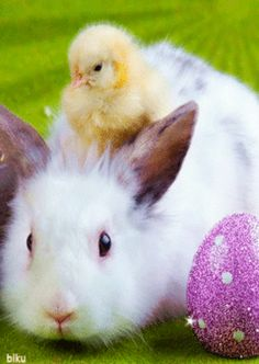 Happy Easter Gif, Happy Easter Wishes, Holiday Gif, Holiday Cards, Gif Pictures, Animal Pictures, Bunny Images, Ad Of The World, Easter Peeps