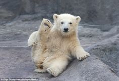 The five-month-old cub shows off her stretches as she enjoys the morning air at Moscow Zoo