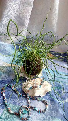 IMG_20160216_132028 Landscape Design, Plants, Handmade, Hand Made, Landscape Designs, Plant, Planets, Handarbeit