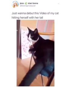 Funny memes - Belezza,animales , salud animal y mas Funny Shit, Funny Animal Memes, Funny Animal Videos, Stupid Funny Memes, Cute Funny Animals, Funny Relatable Memes, Funny Animal Pictures, Cute Baby Animals, Cute Cats