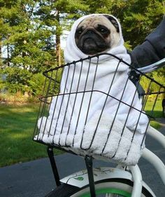 This pug who can't believe he didn't at least get to meet Drew Barrymore if you're going to make him do the E.T. thing.