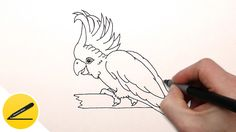 How to Draw a Parrot     Drawing tutorial for beginners. In this video I will show you how to draw a Cockatoo parrot step by step. Learn to draw a parrot Cockatoo. Уроки рисования дл...