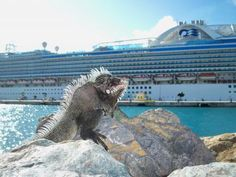 #St.Thomas - #Caribbean www.whatarushvacations.com