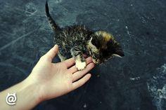 Beautiful <3 #purr #kitten #cuties #fluffy