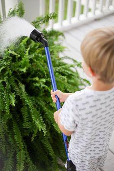 how to get big healthy ferns - Megan Stokes Hanging Ferns, Hanging Plants Outdoor, Plants For Hanging Baskets, Best Indoor Plants, Fern Planters, Potted Ferns, Porch Plants, House Plants, How To Get Bigger