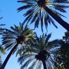 Málaga, Spain Places Ive Been, Plants, Plant, Planets