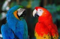 "parrots"" data-componentType=""MODAL_PIN"