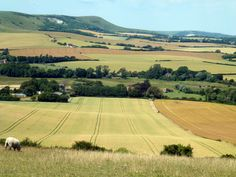 The rolling fields of Sussex - just off the South Downs Way at Willmington Salisbury Plain, Genius Loci, Landscape Structure, Future Farms, English Countryside, East Sussex, Countries Of The World, Beautiful Islands, Landscape Photos