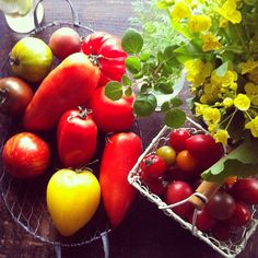 野菜 @yuriri51- #webstagram