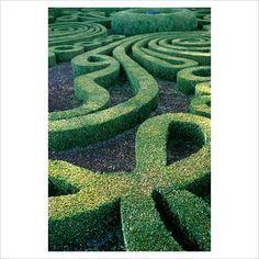 Topiary garden at Villa Lante, Italy.