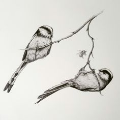 Long tailed tits by Kerry Jane Bird Drawings, Animal Drawings, Drawing Sketches, Bird Pencil Drawing, Sketching, Black And White Birds, Black And White Drawing, Bird Pictures, Pictures To Draw