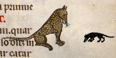 "Depressed mouse. Many of the cats in Medieval manuscripts have narrow face. ""猫の前でしょんぼりしているネズミ。写本の図にいる猫は顔がシュッとしたタイプの猫が多い気がします。実家の猫も細長い感じ。 1350年頃Paris Bibl. Sainte-Geneviève"