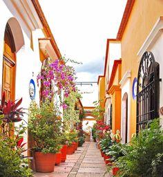 Mexico hermoso por sus Colores y sus flores.