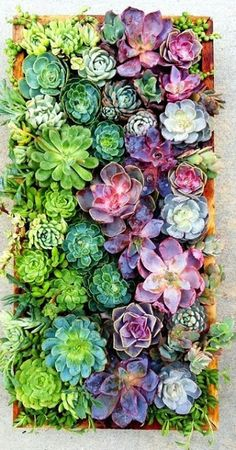 The French Tangerine: ~ succulents #succulents #garden