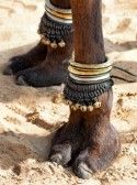 Beautifully decorated camel foot at the Pushkar Fair in India. stock photography