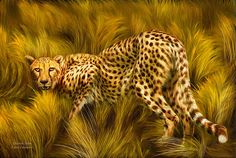 Within the wild grass of the Serengeti Beware Of the Cheetah stare.  Cheetah Stare prose by Carol Cavalaris  This painting of a cheetah crouching in the Serengeti grass, is from Africa collection of art by Carol Cavalaris.