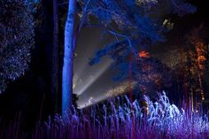 #enchanted #woods #forest #lightart #westonbirt Light Art, Lighting Design, Enchanted, Design Art, Woods, Light Design, Forests